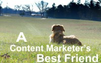 Dogs Speak Out on Content Marketing